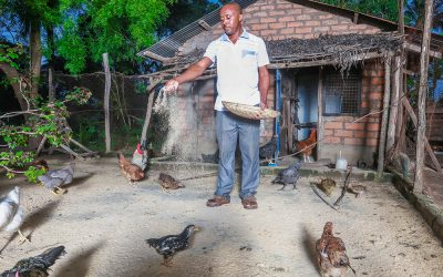 Replacing Wild Meat With Local Chicken To Save The Forests
