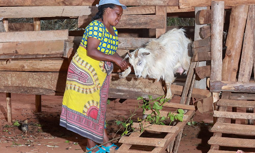 Goat-Keeping-featutrd-image