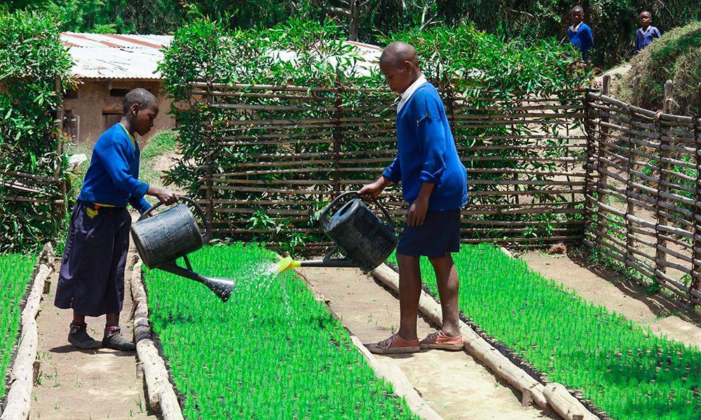 Students-watering-the-tree-seedlings